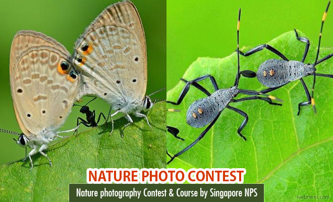 Nature photography Contest and course by NPS Singapore
