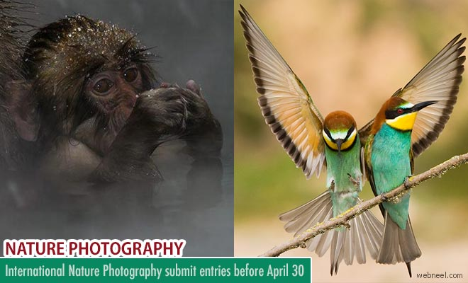 International Nature Photography Contest accepting entries till April 30