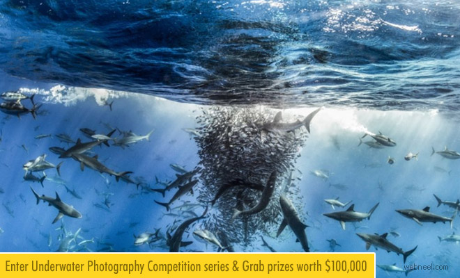 Enter Underwater Photography Competition - Win $100,000   27 Jan 2018
