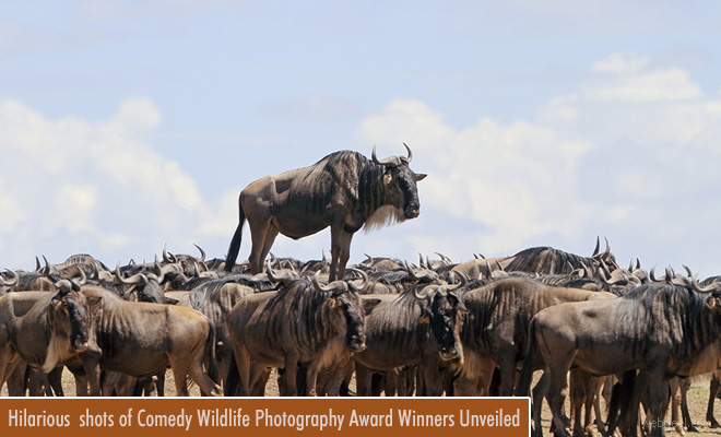 Hilarious and most fascinating shots of Comedy Wildlife Photography Award Winners Unveiled