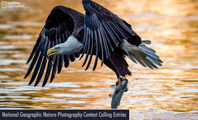 2017 Nature Photographer by National Geographic Open for Entries Till Nov 17