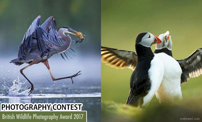 British Wildlife Photography Awards - Prize of 5000 Euro - 3 June 2017