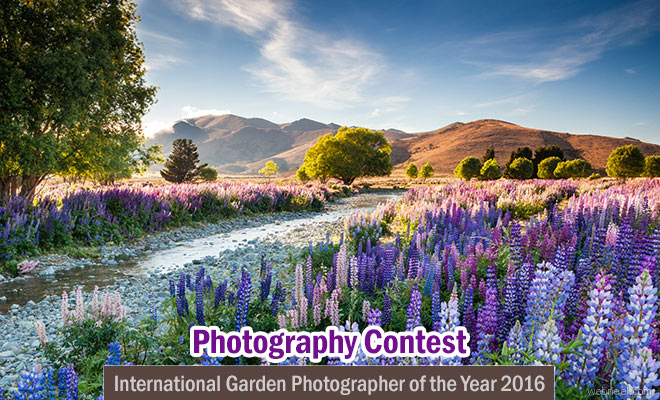 International Garden Photographer of the Year 2016