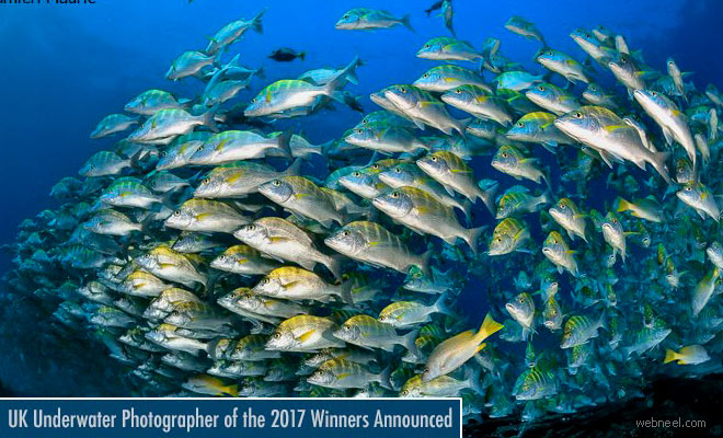 Underwater Photographer of the Year 2017 - See Best Award Winning Photos
