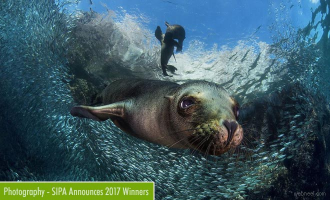 Winners Declared for the 2017 Sienna International Photography Awards