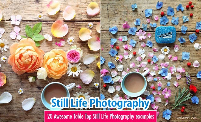 20 Beautiful Still Life Flower Photography examples by Philippa Stanton