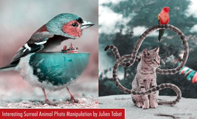 Surreal Animal Photo Manipulation by French Artist Julien Tabet