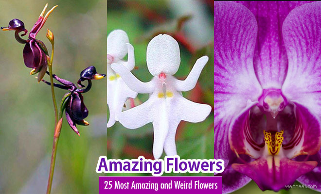 25 Most Amazing And Weird Flowers From Around The World