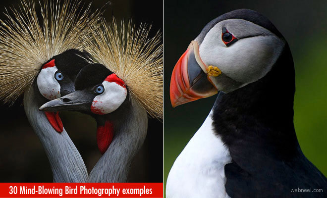 50 Mind-Blowing Bird Photography examples for your inspiration - Part 2