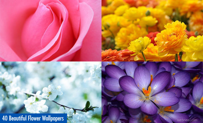 40 Beautiful Flower Wallpapers For Your Desktop Mobile And Tablet