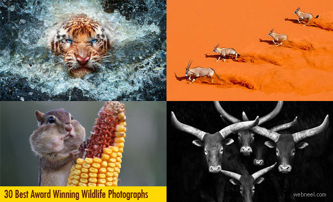 30 Best Award Winning Wildlife Photography examples around the world