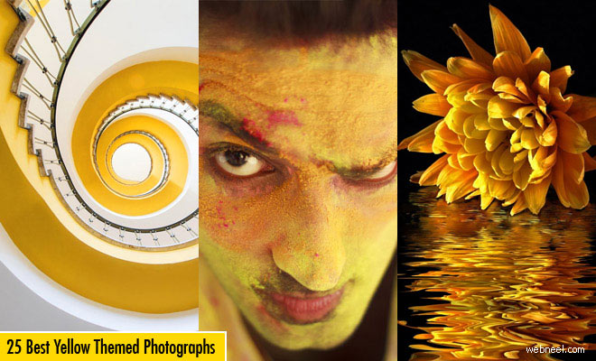 25 Award Winning Yellow themed Photography examples for you