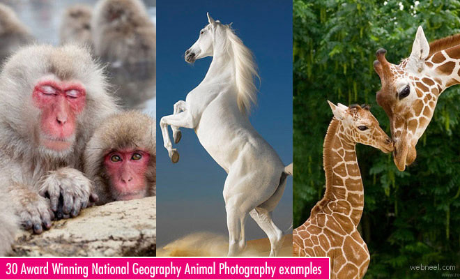 30 Incredible and Award Winning National Geographic Animal Photography examples