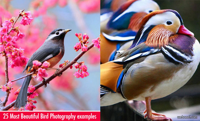 25 Most Beautiful Bird Photography examples and Tips for Photographers