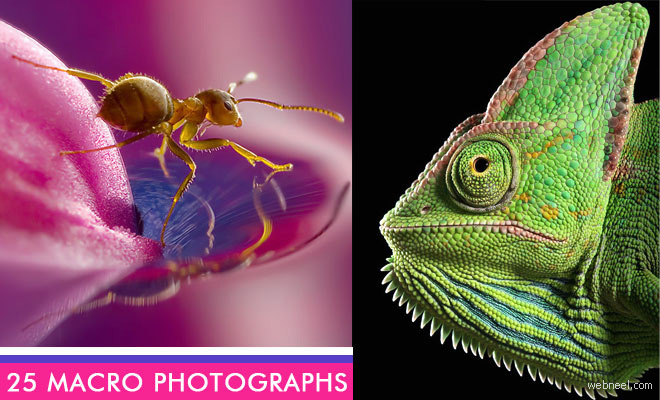 24 Beautiful Macro Photography examples and ideas
