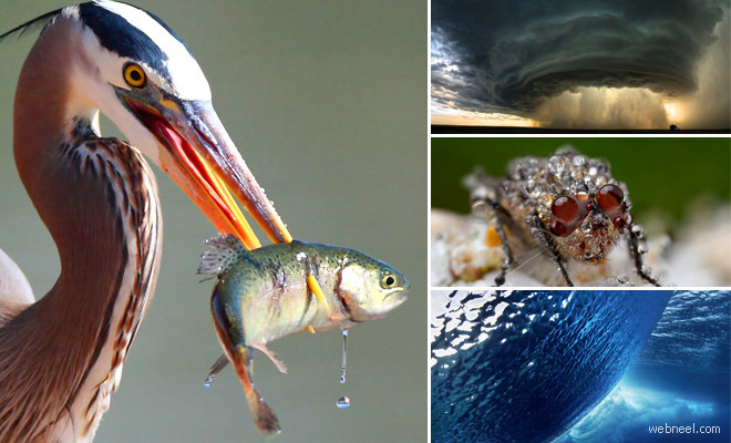 50 National Geographic's Award Winning Photographs - Best Photography Showcase
