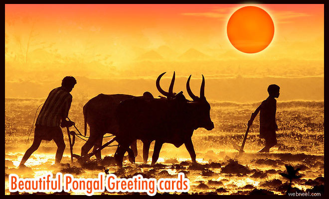 25 beautiful pongal greeting cards and design ideas in tamil m4hsunfo