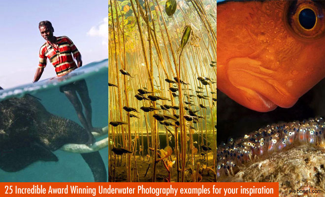 25 Incredible Award Winning Underwater Photography examples for your inspiration