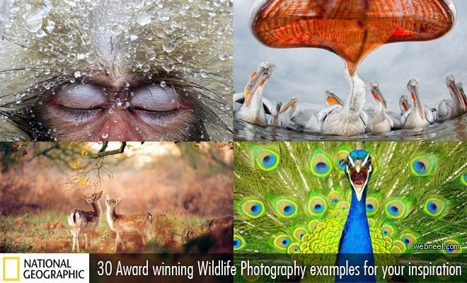 30 Award Winning Wildlife Photography examples for your inspiration