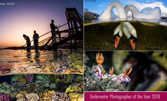 Stunning images of Underwater Photographer of the Year 2018 is unveiled