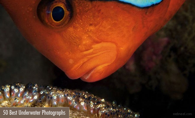 50 Incredible Award Winning Underwater Photography examples - 2