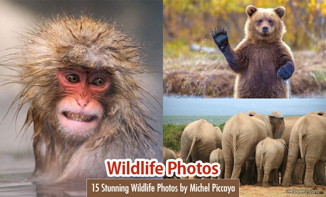 25 Best Award Winning Wildlife Photography examples around the world - Part 9