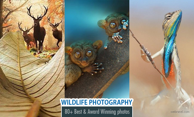 80 Best Award Winning Wildlife Photography examples