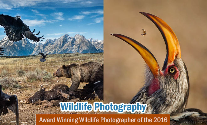 Award Winning Wildlife Photographer of the Year 2016 by Natural History Museum