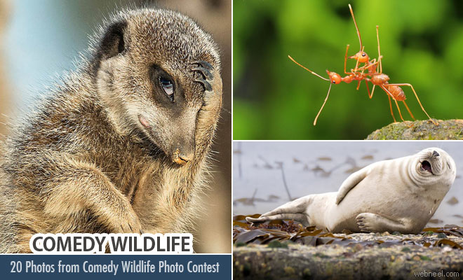 20 Best Award Winning Photos from Comedy Wildlife Photography Contest