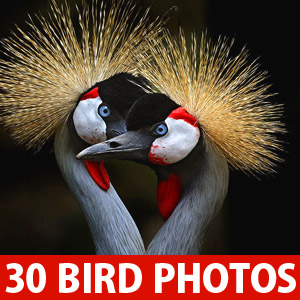 40 Mind-Blowing Bird Photography examples for your inspiration