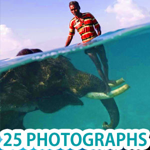 25 Incredible Award Winning Underwater Photography Examples