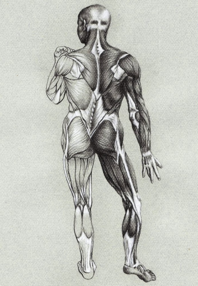 25 Study of Anatomy Drawings - Best Tutuorial by Veri Apriyatno