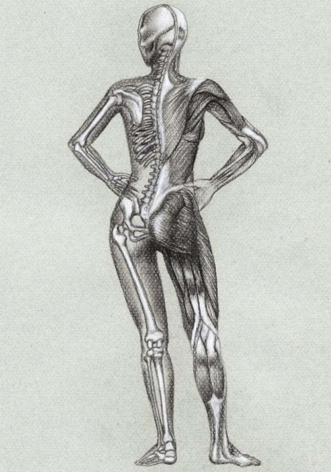 Anatomic study (15)