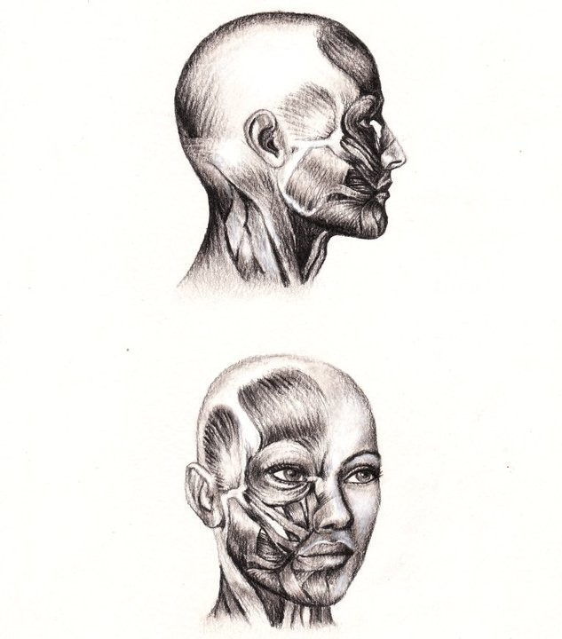 Anatomic study (7)