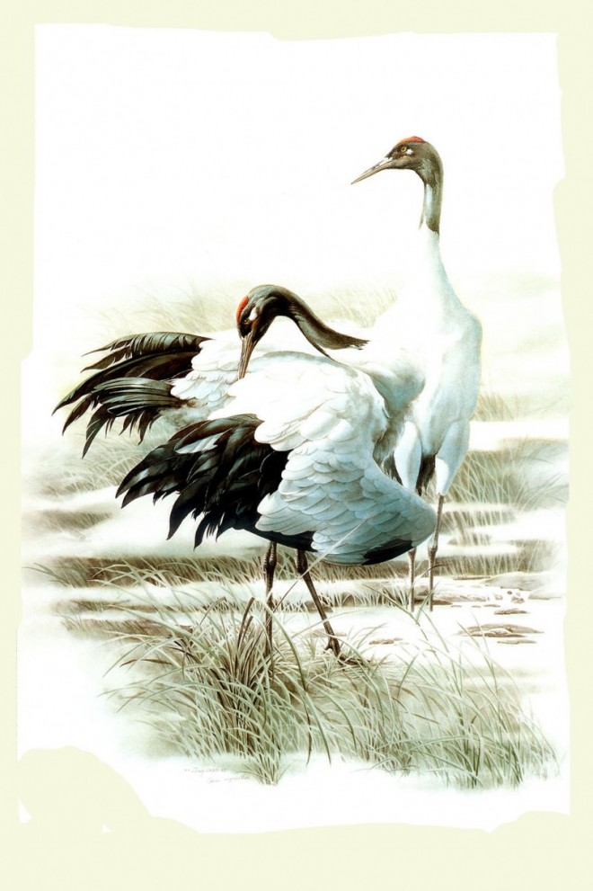 Birds Art Painting (2)
