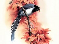 Birds Art Painting (4)