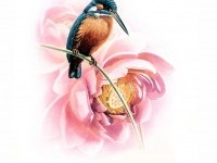 Birds Art Painting (5)