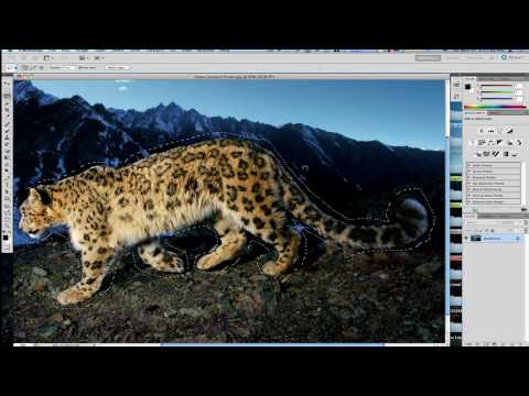 Content Aware Tips and Tricks For Perfection - Photoshop