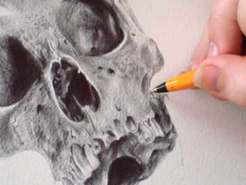 Sugar Skull - Stop Motion Drawing