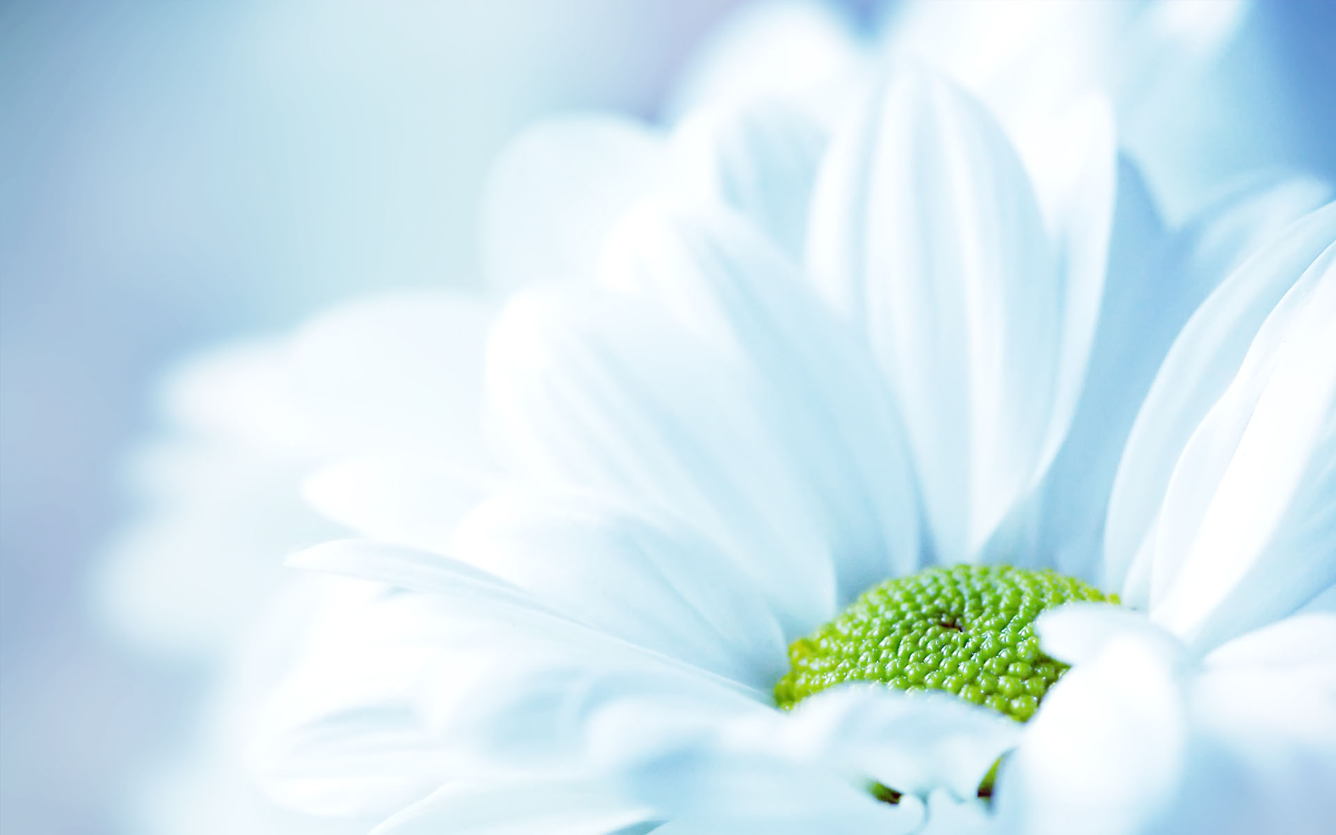 40 Beautiful Flower Wallpapers for your Desktop Mobile and ... Light Blue Flower Wallpaper