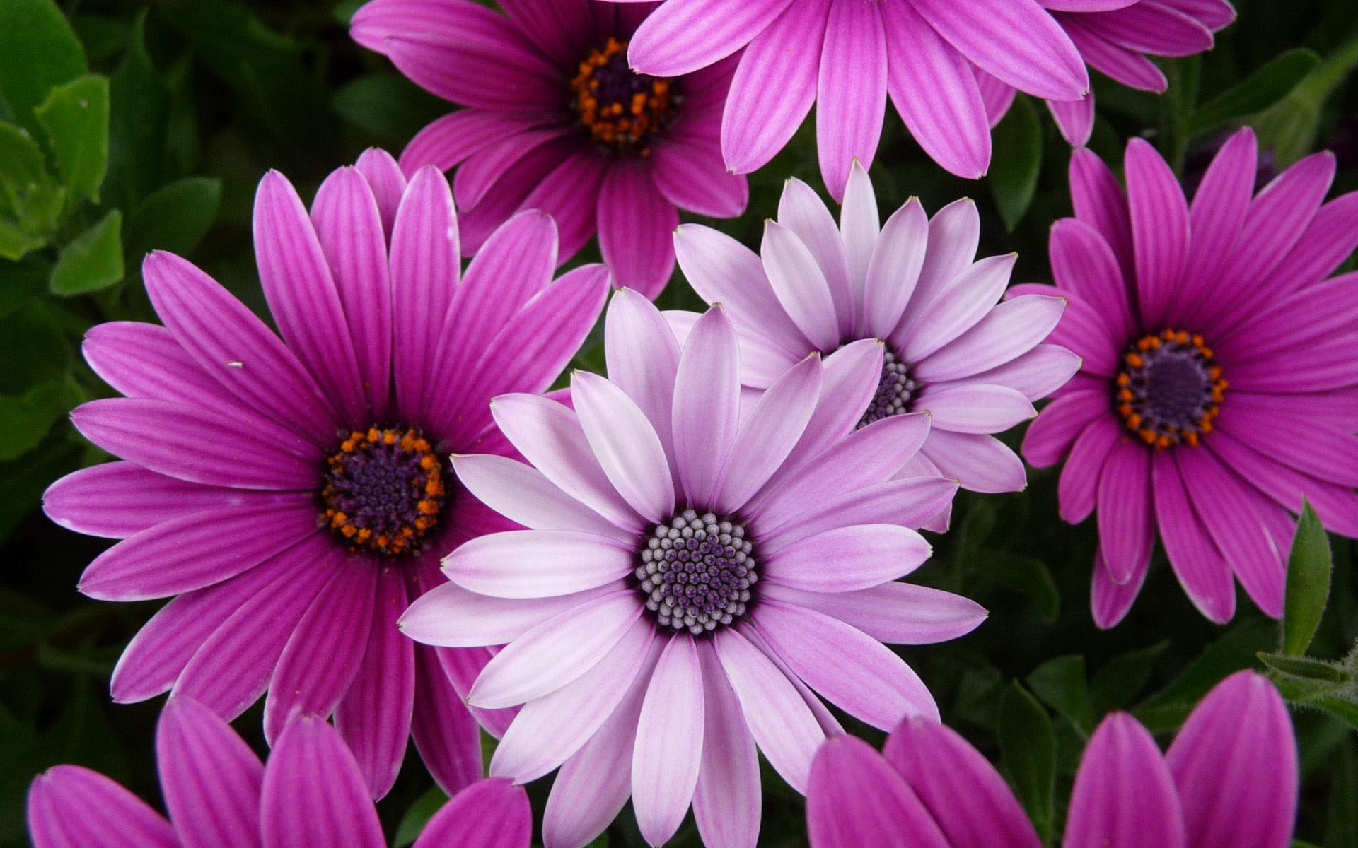 40 beautiful flower wallpapers for your desktop mobile and tablet flower wallpaper violet color flower wallpaper mightylinksfo