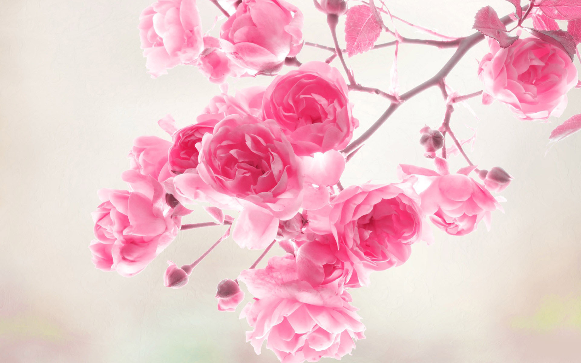 40 beautiful flower wallpapers for your desktop mobile and tablet flower wallpaper flower wallpaper mightylinksfo