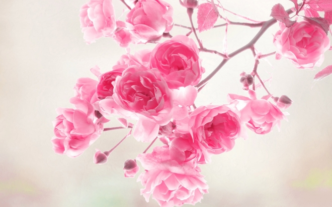 ������ ������ ������ 2016 ���� 20-flower-wallpaper.