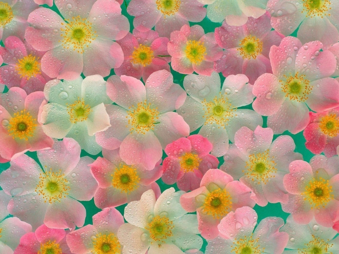 Wallpapers With Flowers flower wallpaper