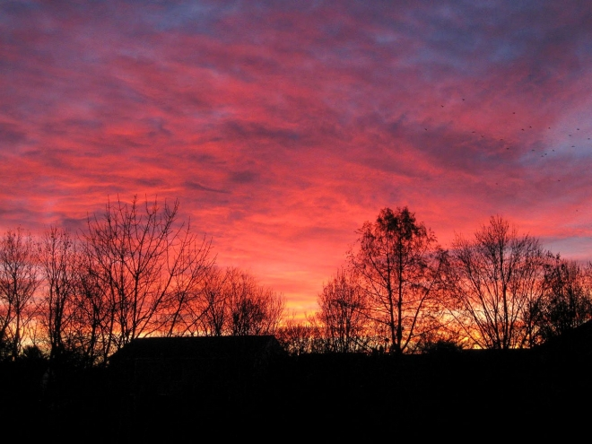 sun rising behind the tree wallpaper