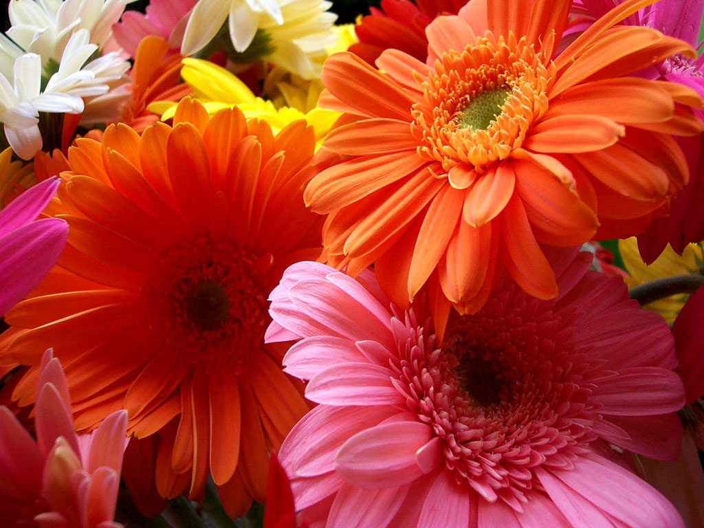 Beautiful colorful flowers wallpaper hd wallpaper size 1024 x 768 beautiful colorful flowers wallpaper izmirmasajfo