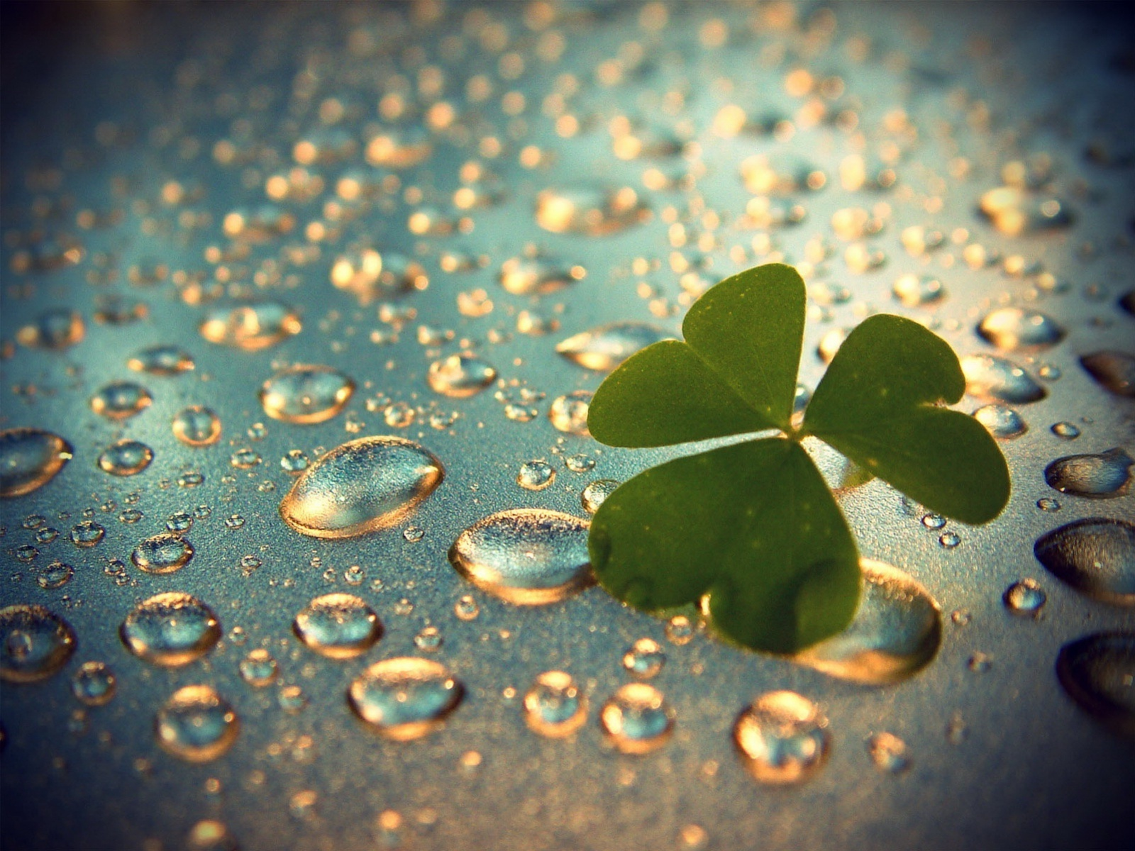leaves on drops wallpaper