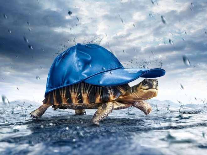 tortoise in rain wallpaper