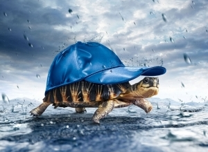 tortoise in rain wallpaper