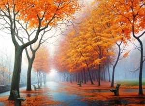 rainy orange trees wallpaper